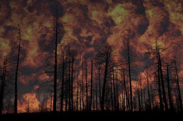 کشف آتش سوزی در جنگل ها با حسگرهای بدون احتیاج به شارژ