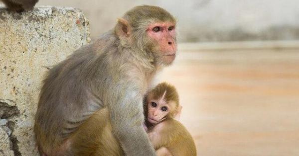 دستیابی به جامع ترین مرجع ژنوم پستانداران برای کمک به شناسایی تغییرات ژنتیکی