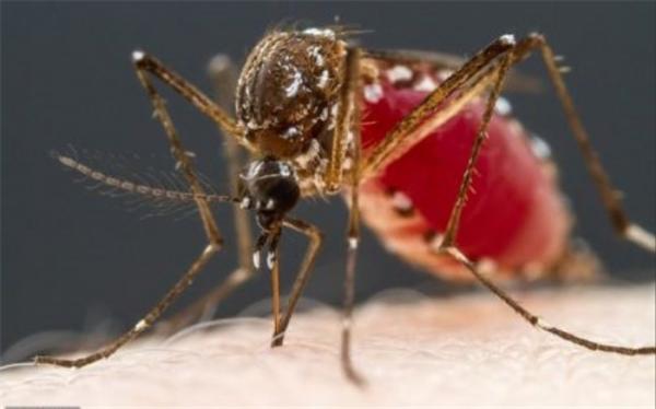 خون انسان برای پشه ها چه طعمی دارد؟